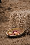Fresh Apples. In a wooden bowl, near hay grass Royalty Free Stock Image