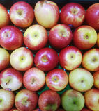 Fresh apples. The apple tree is a deciduous tree in the rose family best known for its sweet, pomaceous fruit, the apple. It iscultivated worldwide as a fruit royalty free stock images