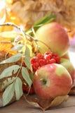 Fresh apples Stock Image