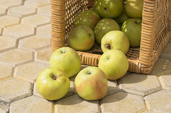 Fresh apples. In a basket Royalty Free Stock Photography