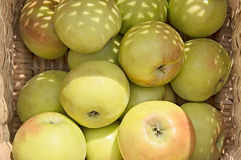 Fresh apples. In a basket Royalty Free Stock Photos