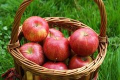Fresh Apples Royalty Free Stock Photos
