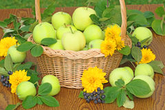 Fresh apples in a basket Royalty Free Stock Images