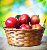 Fresh apples in basket. Over shiny leaves background Royalty Free Stock Photos