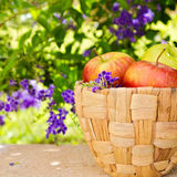 Fresh apples in basket on stone surface on beautiful bokeh background Royalty Free Stock Photography
