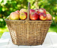 Fresh apples in a basket Stock Photos