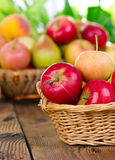 Fresh apples in the basket Royalty Free Stock Images
