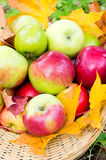 Fresh apples in basket Royalty Free Stock Images