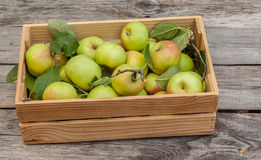 Fresh apples in box on wooden table Royalty Free Stock Photo