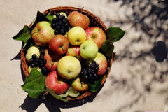 Fresh apples and chokeberry Stock Image