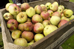 Fresh apples in crates Royalty Free Stock Photography