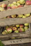 Fresh apples in crates Stock Photo