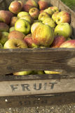 Fresh apples in crates Royalty Free Stock Photo