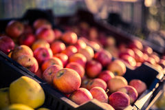 Fresh apples in a market Stock Images