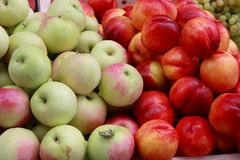 Fresh apples and nectarines Stock Images