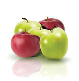 Fresh apples with reflection Stock Photos