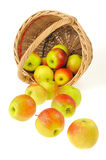 Fresh apples spilling out of basket - isolated on. White background. Clipping path included Stock Images