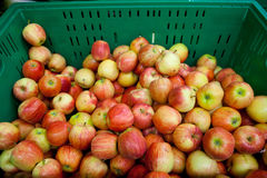 Fresh apples in tray Stock Image