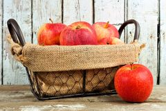 Fresh apples in vintage wire basket against white wood Royalty Free Stock Photo