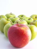 Fresh apples on a white background Stock Photography