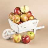 Fresh apples in a wooden wheelbarrow Royalty Free Stock Images
