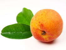 Fresh apricot Royalty Free Stock Photography