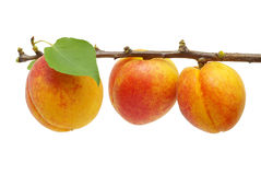 Fresh apricot Royalty Free Stock Photos