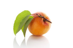 Fresh apricot. Royalty Free Stock Photos