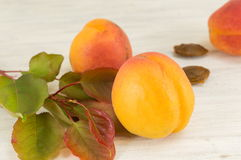 Fresh Apricot fruit with leaves. And branch Royalty Free Stock Image