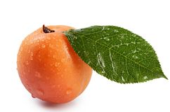 Fresh apricot with a leaf Stock Images