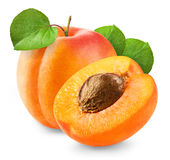 Fresh apricot Stock Image