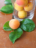 Fresh apricot and leaves Royalty Free Stock Photos