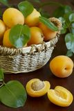 Fresh apricots Stock Photography
