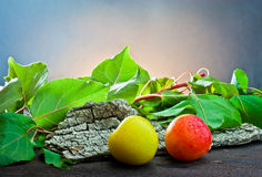 Fresh apricots Stock Image