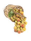 Fresh apricots Stock Image