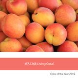 Living Coral Color of the Year, fresh apricots stock images