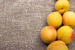 fresh apricots on burlap sack on table stock photo