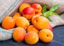 Fresh apricots on burlap sack Stock Images