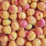 Fresh apricots closeup Stock Photos