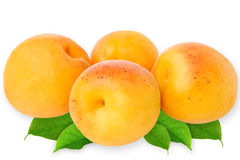 Fresh apricots isolated on white background Royalty Free Stock Photography