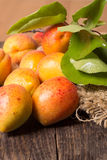 Fresh apricots with leaf Stock Photo