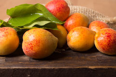 Fresh apricots with leaf Royalty Free Stock Photo