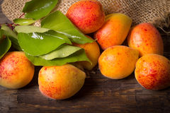Fresh apricots with leaf Royalty Free Stock Image