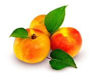 Fresh apricots with leafs. Fresh apricot fruits with green leaf isolated with clipping path included Stock Images