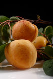 Fresh apricots with leafs Stock Photo