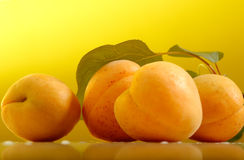 Fresh apricots with leafs Stock Images