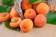 Fresh apricots with leaves Royalty Free Stock Photography