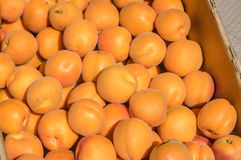 Fresh apricots at the market Royalty Free Stock Images