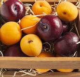 Fresh apricots and plums in wooden box Royalty Free Stock Images