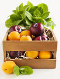 Fresh apricots and plums in wooden box Royalty Free Stock Photography